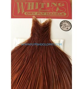 Whiting Collo Bronze Brown