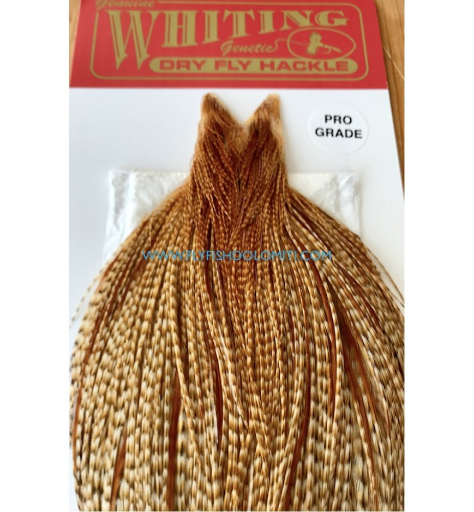 Whiting Pro Grade Barred Cape Dark Ginger