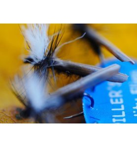 LEUCTRA FLY